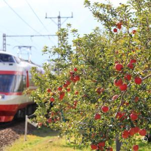 宝石のようなリンゴとりんご電車