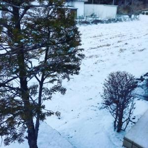 明日の大寒前に雪…