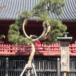 【秋色櫻異聞】死神の桜に宿る忍岡〜自殺の名所だった上野の山