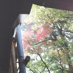 2000/11/25-27奈良斑鳩たっぷり(唐招提寺金堂は改修中)・京都少し3:京都千本えんま堂・釈迦堂・三十三間堂