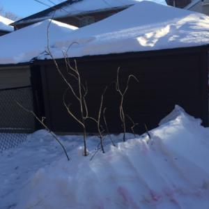 裏庭で雪の要塞を作りました。