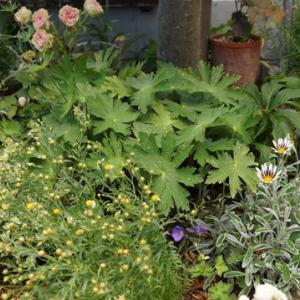 お庭の様子とリハビリ寄せ植え