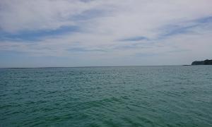 白鱚からの平政  (外房ゴムボート釣り)