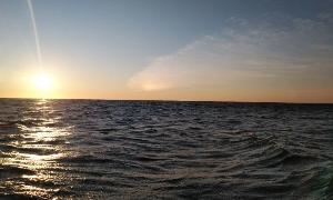 真鯛舞い散る  (外房ゴムボート釣り)