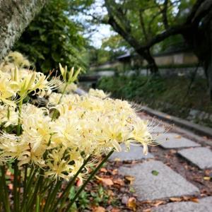 彼岸花 / 京都・哲学の道