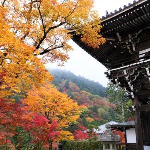 紅葉 / 京都・善峯寺 1
