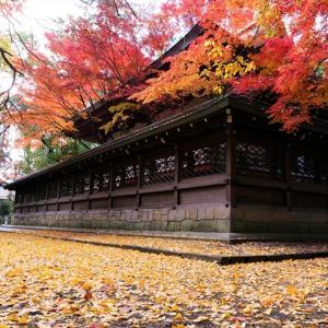 紅葉 / 京都・上御霊神社