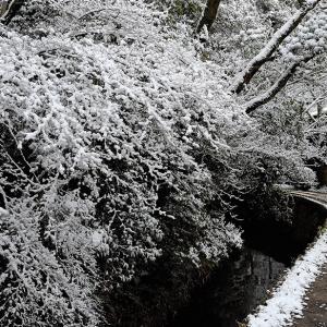 雪景色12 / 京都・哲学の道~大豊神社