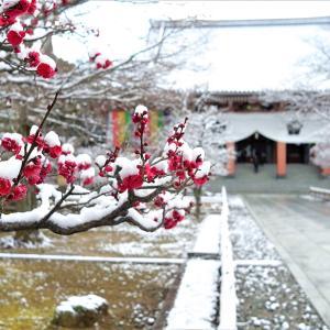 雪景色13 / 京都・智積院