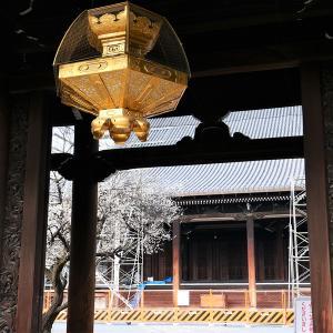 梅 / 京都・興正寺