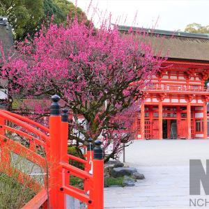 光琳の梅 / 京都・下鴨神社