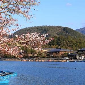 枝垂れ桜 / 京都・嵐山