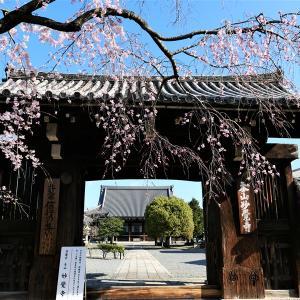 枝垂れ桜 / 京都・妙覚寺&水火天満宮