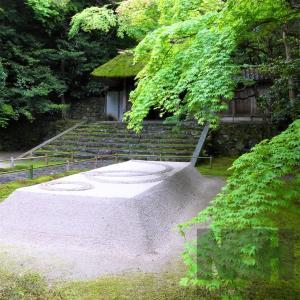 新緑 / 京都・法然院