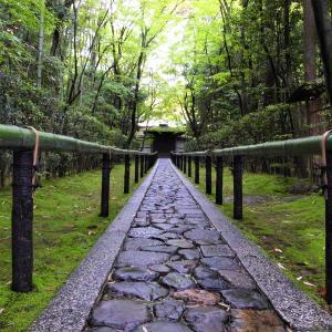 新緑 / 京都・高桐院