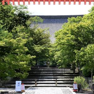 山紫陽花 / 京都・真如堂