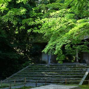 青モミジ / 京都・法然院