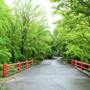 青モミジ / 大阪・万博公園