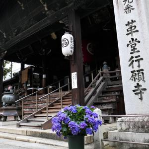 蓮 / 京都・革堂行願寺