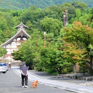 蓮 / 京都・天龍寺