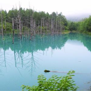 青い池&白ひげの滝 / 美瑛・白金