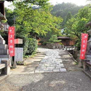 秋明菊 / 京都・大豊神社