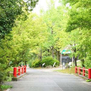 ナツズイセン / 大阪・万博公園