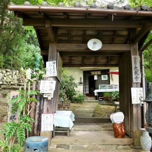 酔芙蓉 / 京都・大乗寺