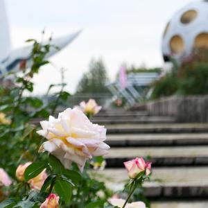 ローズフェスタ / 大阪・万博公園