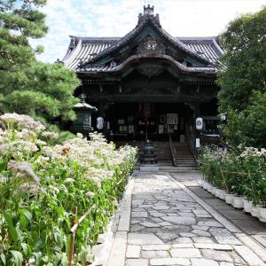 藤袴 / 京都・革堂行願寺