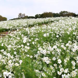 花の丘 / 大阪・万博公園
