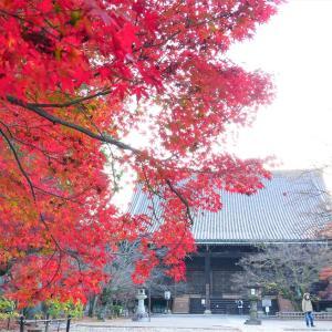 紅葉 / 京都・真如堂