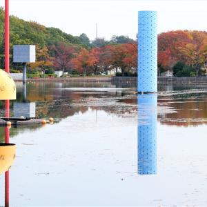 紅葉 / 大阪・万博公園 ②
