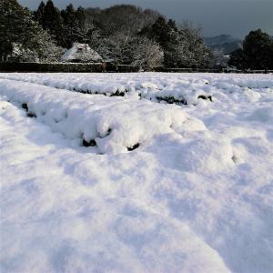 雪景色 / 京都・落柿舎