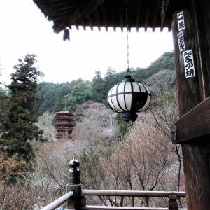 冬ぼたん / 奈良・長谷寺