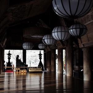 冬牡丹 / 奈良・長谷寺