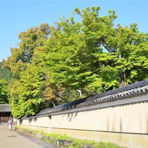 新緑 / 京都・清凉寺