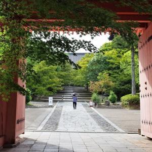 菩提樹&紫陽花 / 京都・真如堂