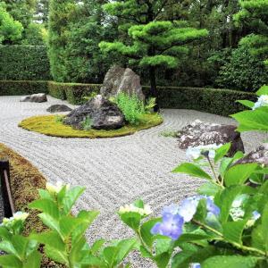 紫陽花 / 京都・退蔵院