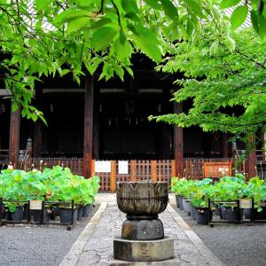 蓮 / 京都・立本寺