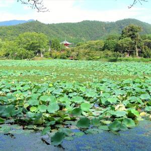 京都・大沢の池