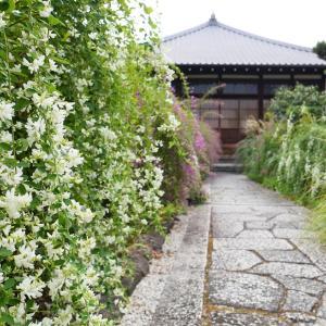 萩 / 京都 / 京都・常林寺