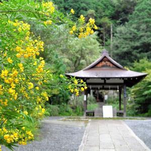 京都・大豊神社