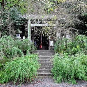 萩 / 京都・大豊神社