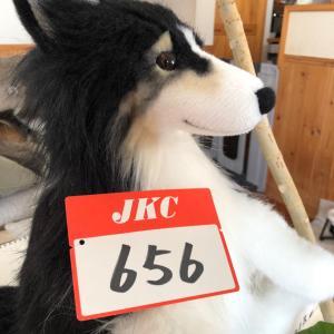 埼玉ブロックアジリティー競技会…結果より元気が1番。。