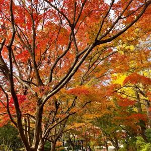 【ご案内】京都癒しの旅にお任せ♪ そのとき見頃の紅葉の旅