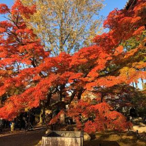 秋の京都で、ゆっくりのんびり♪