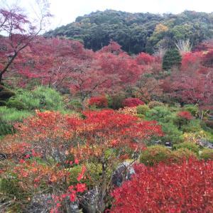観音様の足の裏から坂井画伯のライブまで、こんな京都をご一緒しました。