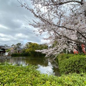神泉苑に手を合わせてきました。