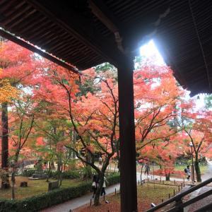 この秋は、静かな京都へぜひ♪